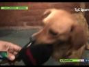 В Аргентине пёс прервал футбольный матч покусал мячи и дал интервью