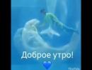 танцы дельфинами