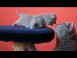 Мама кошка и котята, каково это - быть матерью
