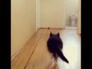 Котенок и мяч.