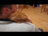 Любитель обнимашек (VHS Video)