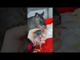 Giant rat shows her babies