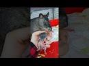 Giant rat shows her babies