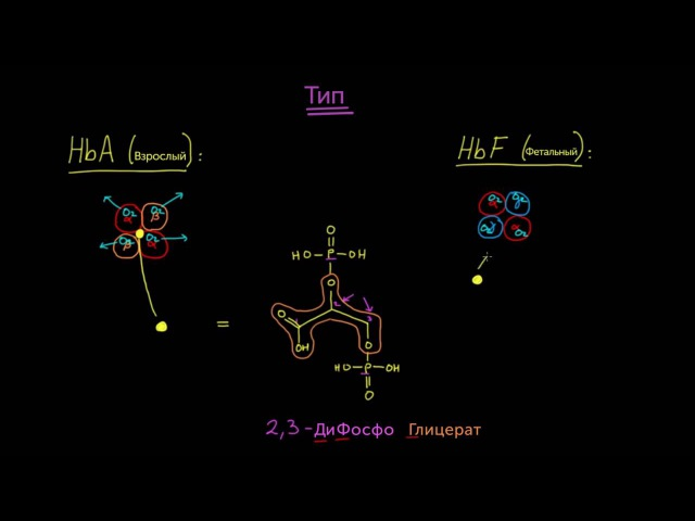 4 Гематология Фетальный гемоглобин Медицина