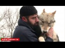 В доме у Хасана Берсанова уже 7 месяц живет хищник