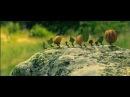 Букашки Приключение в Долине муравьев 2013 трейлер на русском