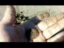 КОП №3 Коп на пляже (MAKRO RACER 2)