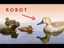 Robot duck !! My Mom..