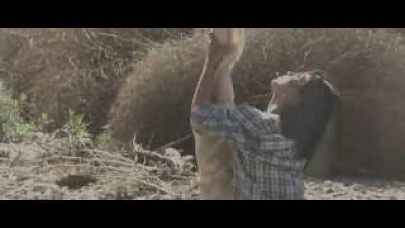 The Chain - Ingrid Michaelson | Selkie Hom - Aerial Hammock Music Video de Erin Brown