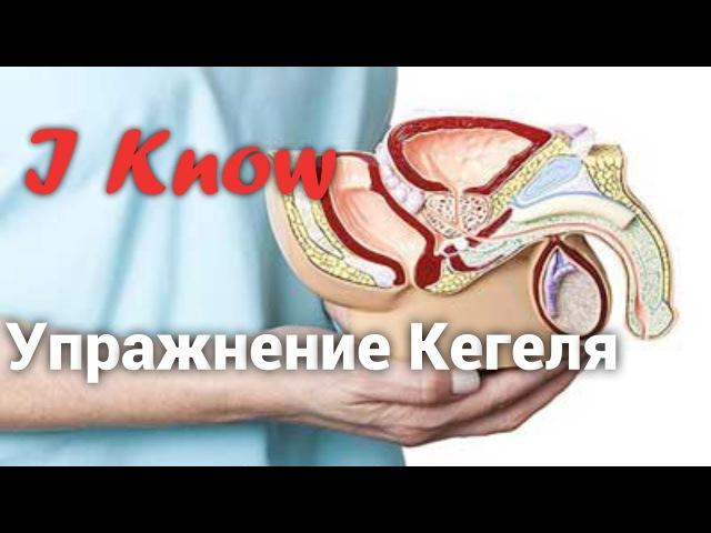 Упражнение Кегеля для мужчин. Как улучшить потенцию? Лобково-копчиковая мышца.