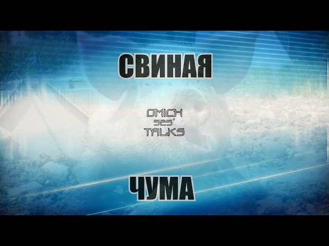 Свиная чума в Омской области правда или вымысел ОМИЧИ ГОВОРЯТ