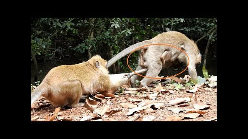OMG You will cry. break heart when see video,How cruel kidnapper do on baby monkey Amara