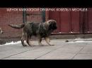 Щенок кавказской овчарки, кобель 5 месяцев. www.r- 7(926)2205603 Татьяна Ягодкина