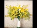 Мимоза..еще один весенний цветок. Превосходен в свадебных букетах. А на языке цветов мимоза означает чувствительность, стыдливос