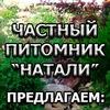 Декоративные кустарники Уфа/Многолетние цветы