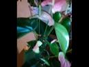 дарите девочкам цветочки ведь это дико приятно