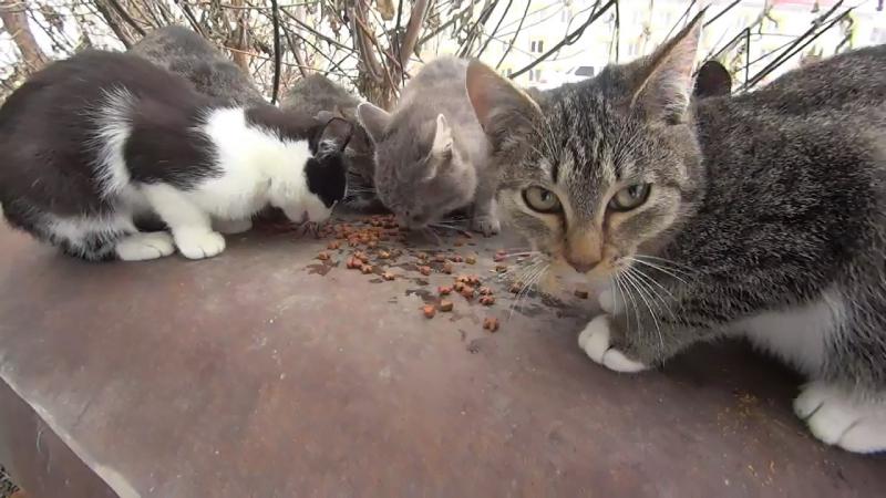 Уличные кошки и первый снег ускоренная версия