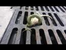 Смертельная схватка геккона и змеи