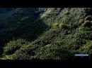 Запах странствий Французская Полинезия Таити Туамоту Маркизские острова