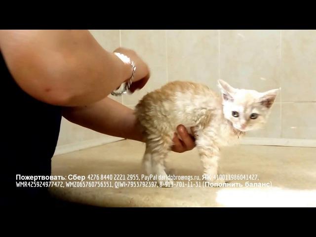 Бездомный котенок ждет помощи | абсцесс слюнной железы | help a homeless kitten