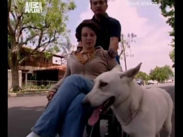Переводчик с собачьего (сезон 1 серия 07 из 26 2004)