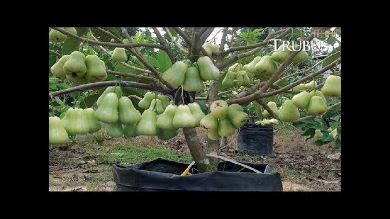 WOW! World's Strangest Fruits - That Look Like Aliens