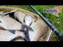 Бюджетное фидерное удилище HELIOS SEYMUR 330 Плотва Лещ Карп Карась Kamfish