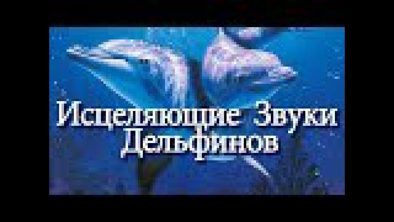 🍀 Исцеляющие Звуки Дельфинов Расслабляющая Музыка | Relaxing Music Healing Dolphins Songs