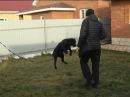 Как отучить собаку прыгать на людей Антуан Наджарян