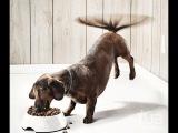 Зверек Приколы про животных Собака вертит хвостом