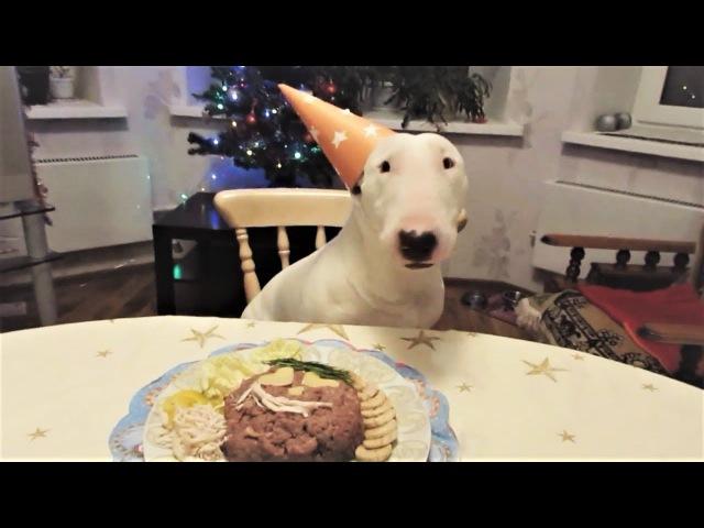 Приколы с животными Смешные собаки Приколы про собак Funny Dogs 2017 2 面白い犬 Приколы с собаками 2017