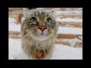 Зимние приколы про животных/самые смешные приколы про животных 2018/смешно до слёз