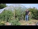 Le Potager du Paresseux tomates comment mieux maîtriser le mildiou sans traiter 24 août 2017