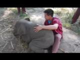 Слонёнок, который любит обнимашки