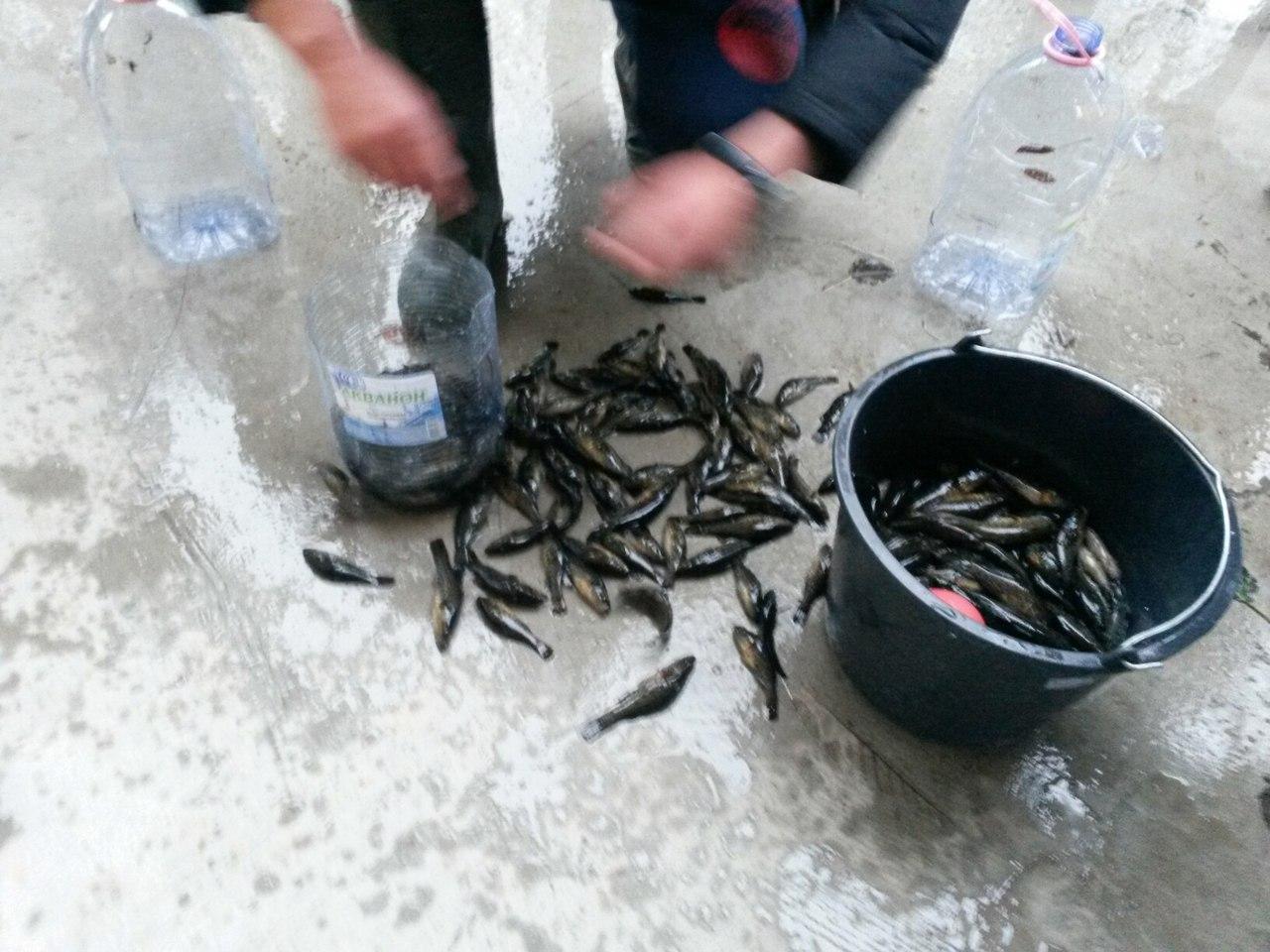 Team of Fishing Actions: Рыболовный фестиваль