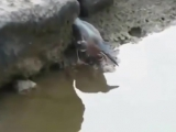 Как вам такой рыбачок)