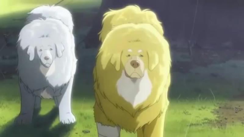Тибетский пёс.