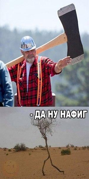 Фото №456261611 со страницы Марины Явтушенко