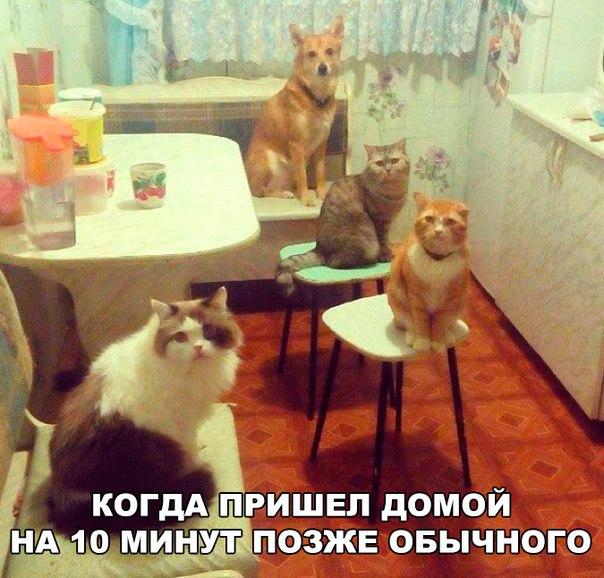 Фото №456261683 со страницы Марины Явтушенко