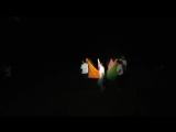 Каркаралинск 2017 - Танец с тканями