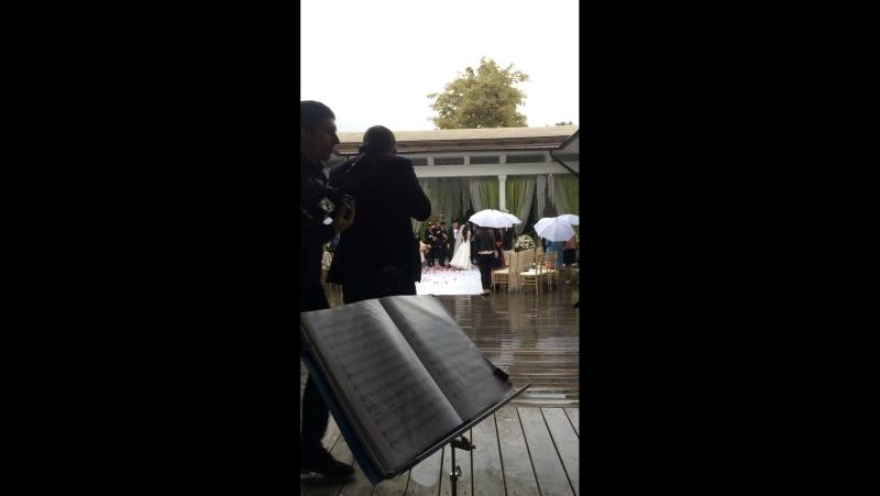 Свадебный танец молодых! Vivat-quartet