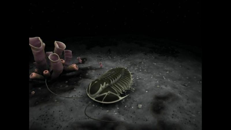 Olenoides serratus(аним)