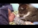 Котики — лучшие няни