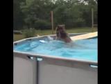 Маленький любитель бассейна :)