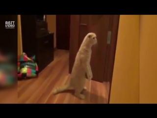 Реакция кота на купание малыша