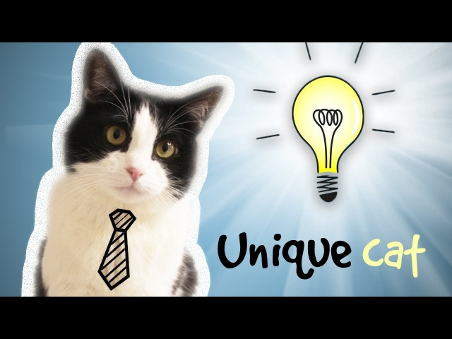 CAT WHO… CAN DO INCREDIBLE THINGS !!
