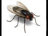 а муха тоже вертолет(полная версия песни)