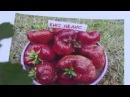 Новые сорта супер крупноплодной садовой земляники Выход передачи 4 08 16