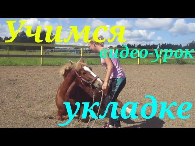 Учим лошадь команде Укладка/ как научить лошадь ложиться?☺ | Barcelona - equestrian