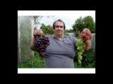 Виноград в Ленинградской области 2015,краткое содержание основного фильма